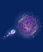 introduction to sexual reproduction in humans Sexual reproduction essays: over 180,000 sexual reproduction essays, sexual reproduction term papers, sexual reproduction research paper, book reports 184 990 essays, term and research papers available for unlimited access.
